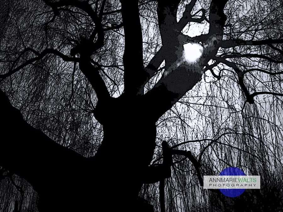 Just A Tree…Silhouette Photography